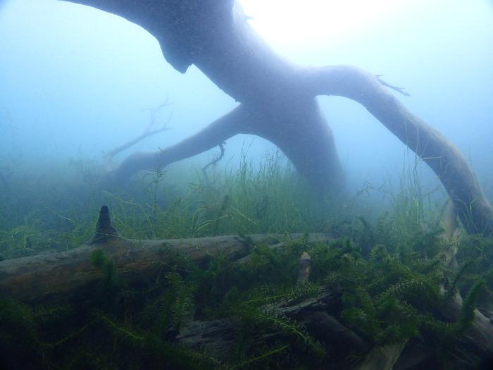 本栖湖ビーチ